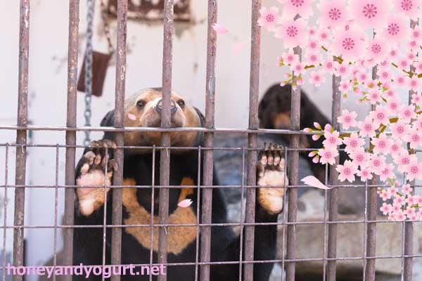 徳山動物園 マレーグマ ツヨシ マーヤ
