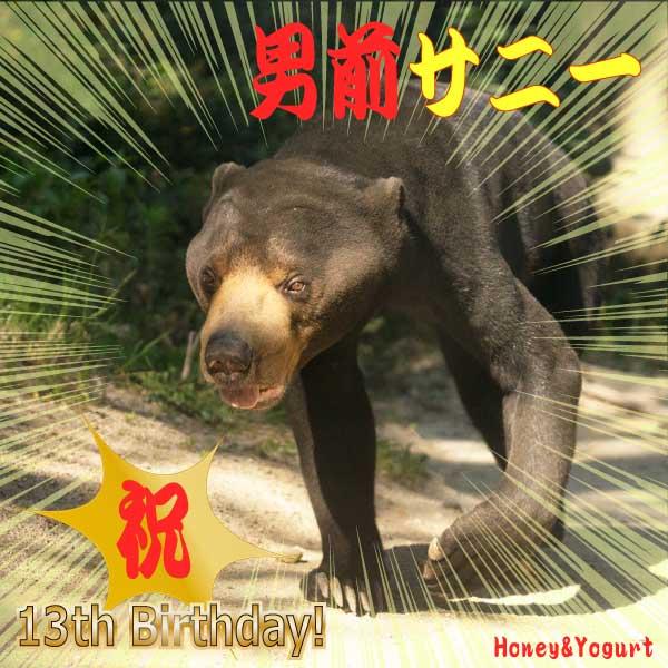 福岡市動物園 マレーグマ サニー Sanii the sunbear FukuokaZoo