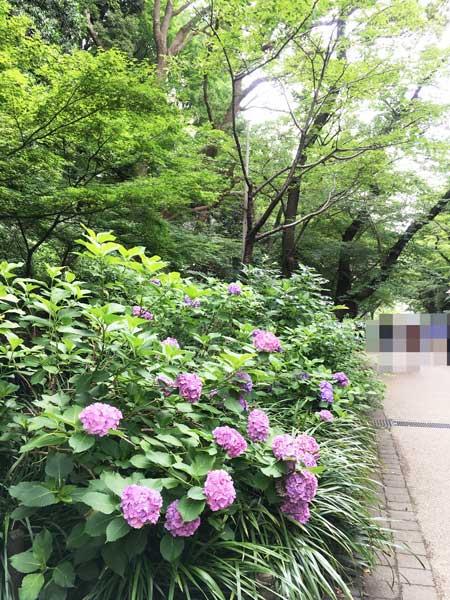 上野公園 桜並木