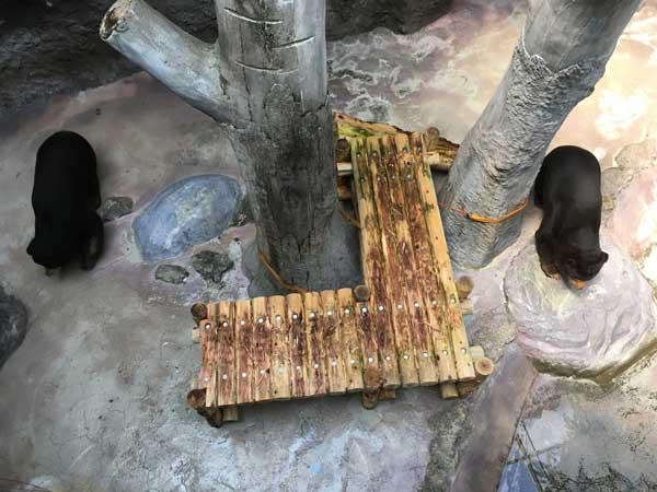 のいち動物公園 ワンピイ タオチイ