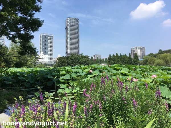 上野動物園 不忍池
