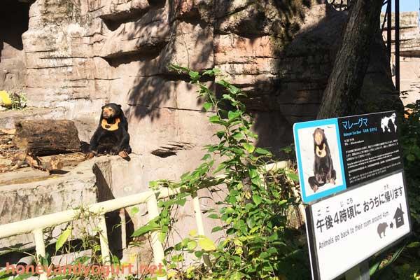 天王寺動物園 マレーグマ舎