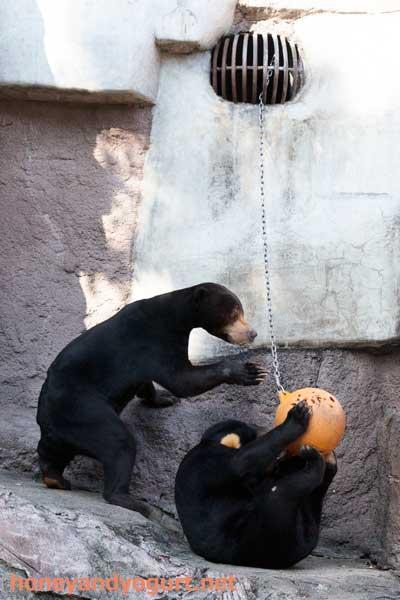 天王寺動物園 マレーグマ マーズ マーサ