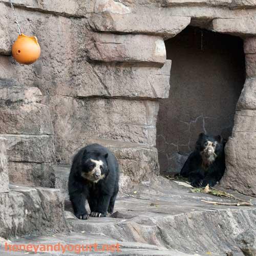 天王寺動物園 クマ舎