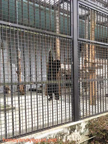 熊本市動植物園 マレーグマ マーネ