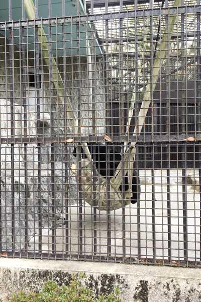 熊本市動植物園 園内