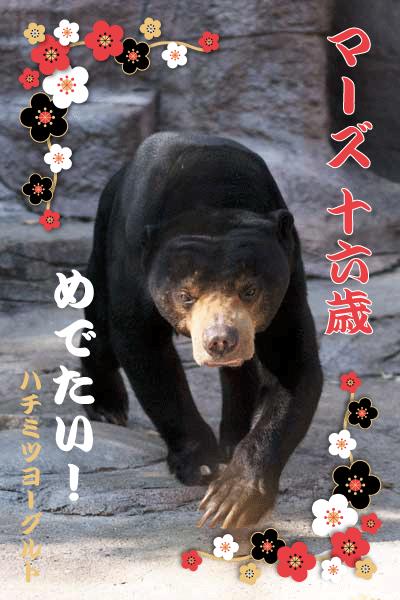 天王寺動物園 マレーグマ マーズ