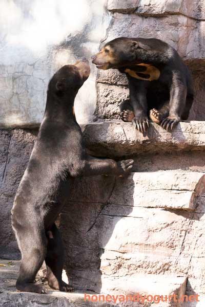 天王寺動物園 マレーグマ マーサ マーズ