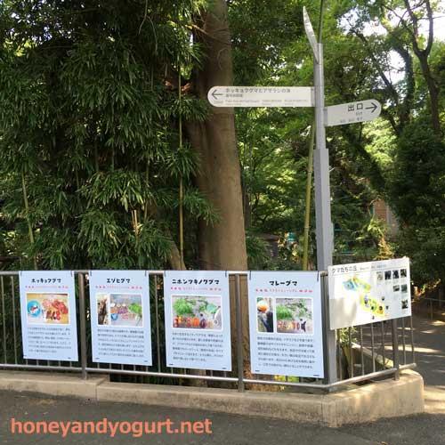 上野動物園 クマたちの丘