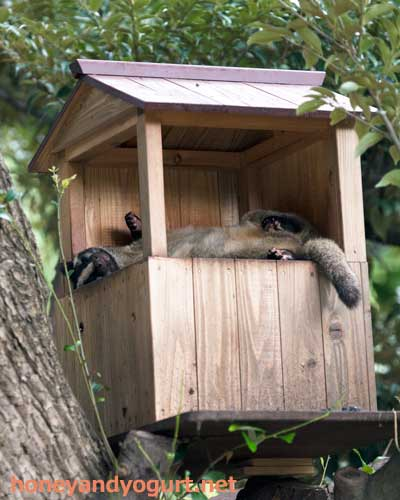 上野動物園 マレーグマ舎 ハクビシン