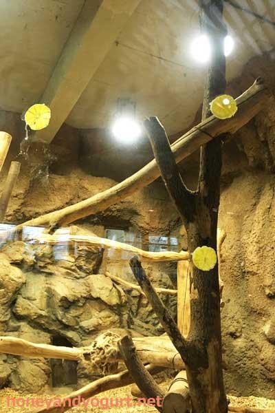 円山動物園 屋内マレーグマ舎