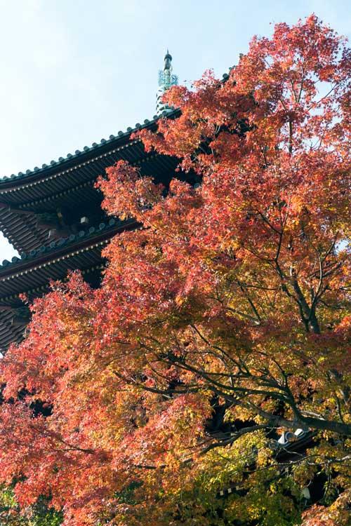 上野動物園 園内 五重塔