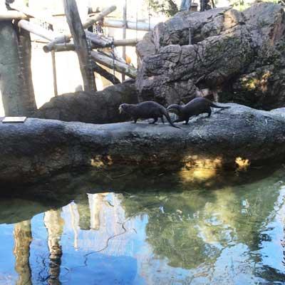 上野動物園 マレーグマ 舎